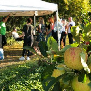 Natural English Cider & Food Tour Petnat Kent Sussex