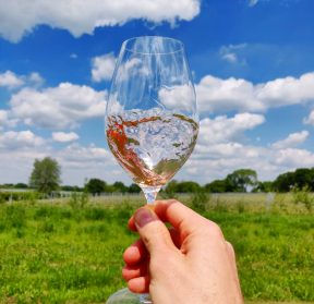 English Wine tours of Kent and Sussex