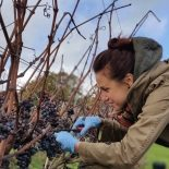 Kent and Sussex wine tasting and vineyard tour